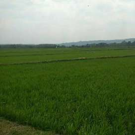 Dijual  sawah produktif area sruweng kebumen 1589 m2 (113.5 ubin)