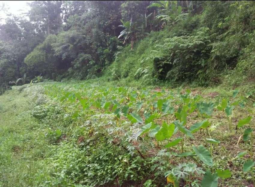 Tanah Murah Dijual Dekat Unnes Rusunawa Gunung Pati Semarang