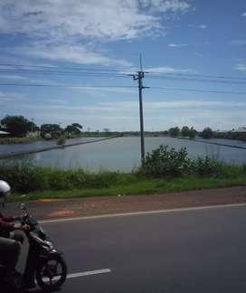 Dijual tanah 8 ha utk gudang / Industri Kaliwungu, Kendal dkt Semarang