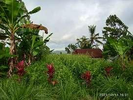 Tanah view agro wisata