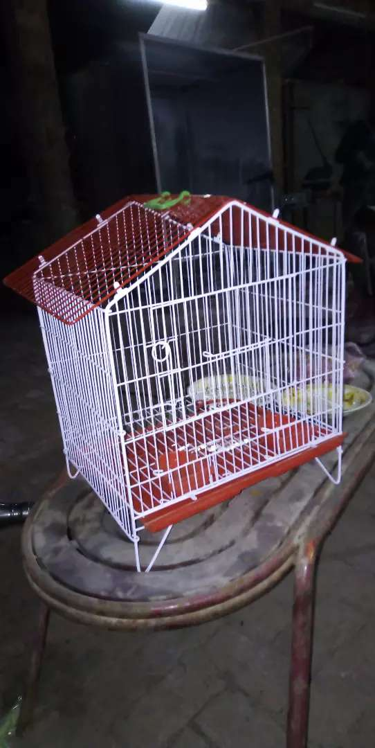 Birds Cages 0