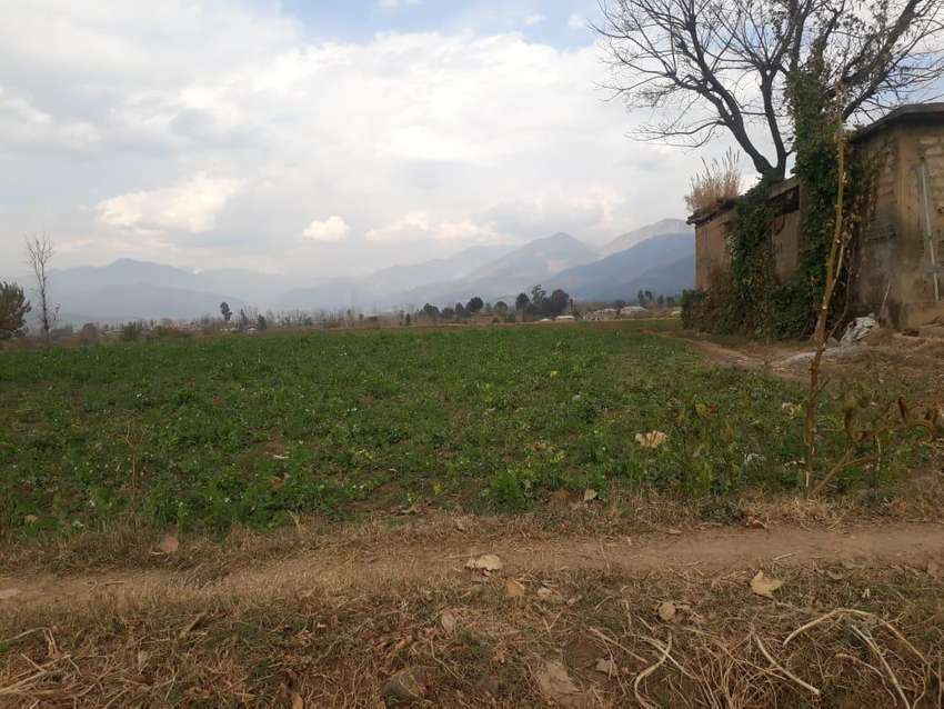40 kanal land in dhodial mansehra