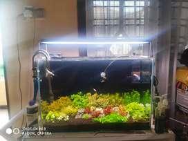 Jual Aquascape Dutchstyle 60cm