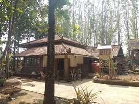 Tanah luas datar dengan kebun jati di Cibadak Sukabumi Jawa Barat