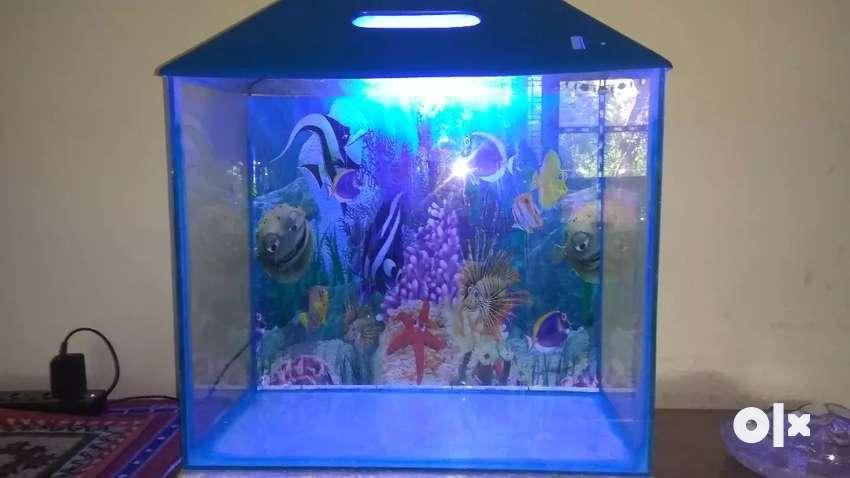 Glass aquarium with light and pebbles 0