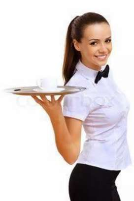 Required stewards ( waiter) male and female