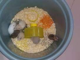 Ratu hamster best Seller Hamster kamu Udah Vaksin Bebas bau pesing