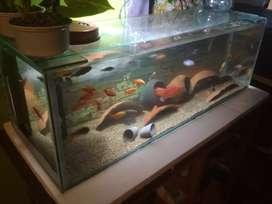 3 feet by 1feet by 1 feet cichlids fish tank..  6mm glass