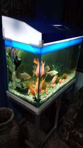 3 feet aquarium complete set