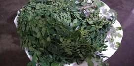 Moringa Leaves / Powder