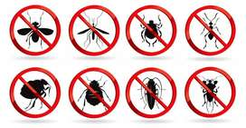 Fumigation, pest control bedbugs cockroach mosquito termite services