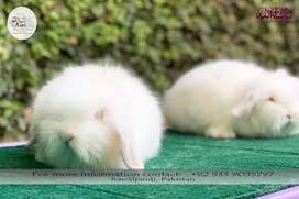 Fuzzy Lop Rabbit Bunnies Pair! Top Quality!