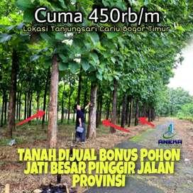 Jual tanah kavling bonus pohon jati emas umur 10thn siap panen