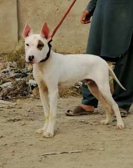 Kohati gulter 5month sale available
