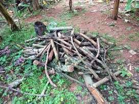 Jackfruit, Mango Firewood - Thrissur Area