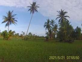 Jual Tanah dipesisir sungai Barito