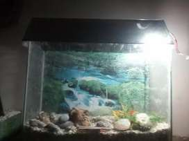 Fish aquarium 2ft length 19 inch height 11 inch width