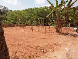 12 Cent & 50 cent Sq plots available near Piravom
