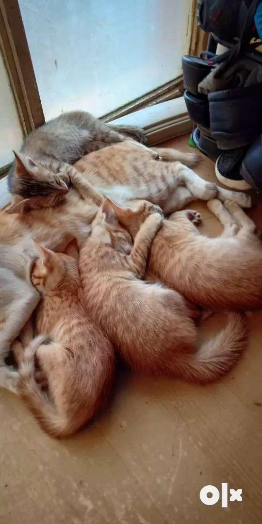Little  Kittens 0