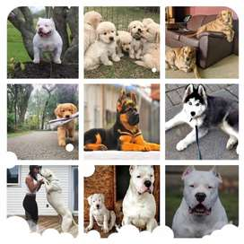 All type of dogs breed