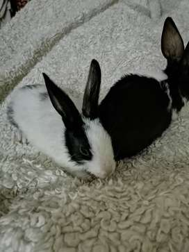 Healthy and active rabbits baby