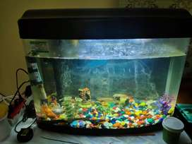 Moulded fish aqaurium