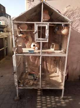 Pingera for sale