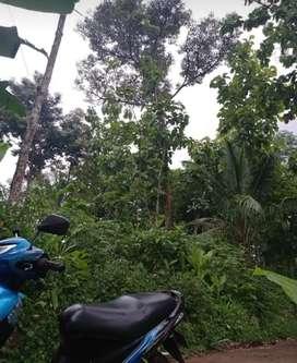 Kebun durian Jumantono