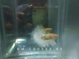 Hm cooper line mantep