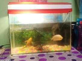 Fish aquarium (aqurium only)