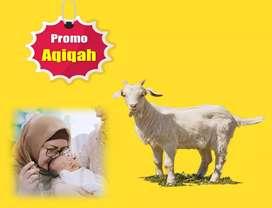 Kambing/domba aqiqah untuk Aqiqah