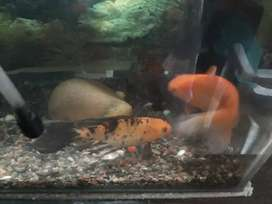 Very healthy and very friendly fish