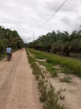 Dijual Kebun sawit (MS) Pulau rupat,600 Ha,SHM,Produktif