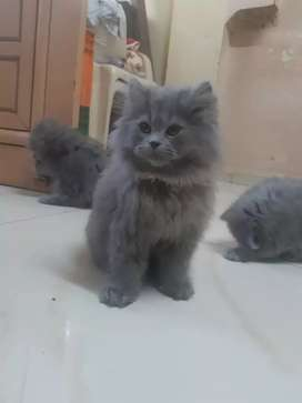 Cute kittens available