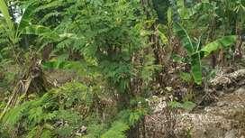 Tanah investasi dikampung kuripan ,karangawen