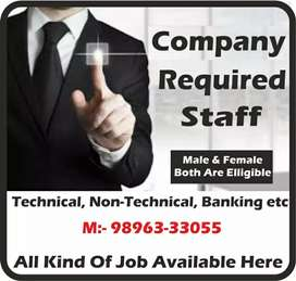 Job in yamunanagar