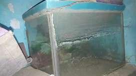 Fish Equireaum