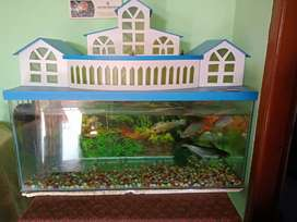 Wanna to sale my aquarium..