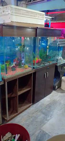 Aquariums and fishes