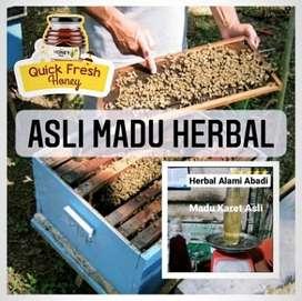 Asli Madu Herbal Madu Karet Asli Herbal Alami Abadi 500gram