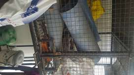 Bird cage with partition