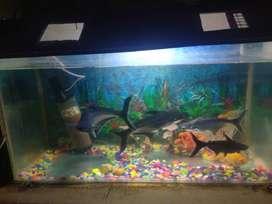 36 inch Full aquarium