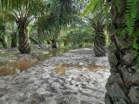 Jual Kebun/Tanah Produktif (Sawit, Pinang) Sempalai Sambas