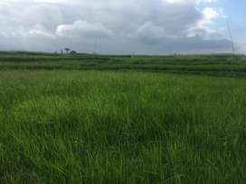 Dijual tanah sawah produktif dan prospek