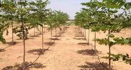 low budget farm plots 1299 per sq yard