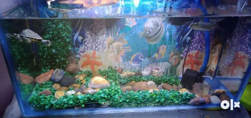 The beautiful aquarium with fishes 0