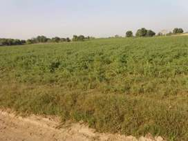 25 ACRES AGRICULTURE LAND CANAL WATER