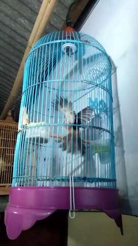 Burung jinak jerojog