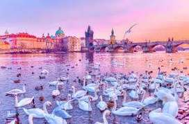 Honeymoon Tour Packages to reach sky with your dreams in Paris-Zurich!