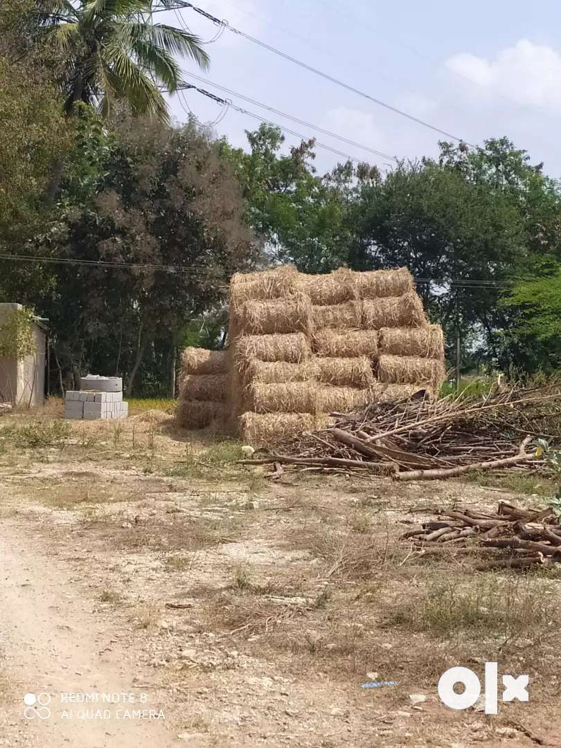 Hay feed for sale 0